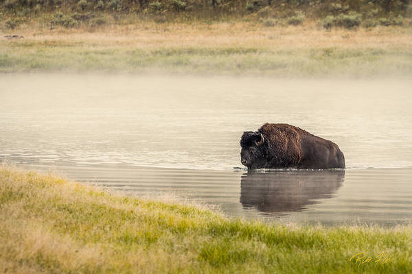 Photograph - Bison Ford by Rikk Flohr
