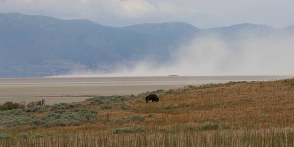 Photograph - Bison Grazing At Salt Lake by Christy Pooschke