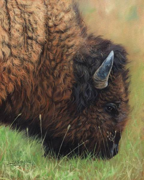 Painting - Bison Grazing by David Stribbling