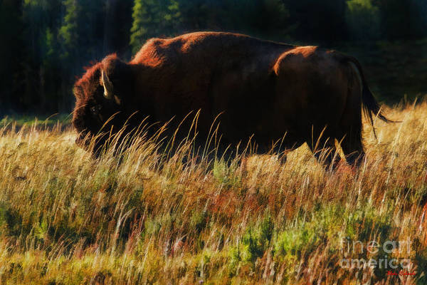 Photograph - Bison In The Twigs by Blake Richards