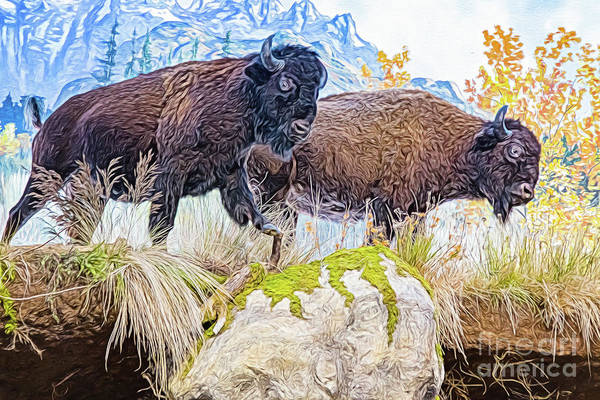 Digital Art - Bison Pair by Ray Shiu