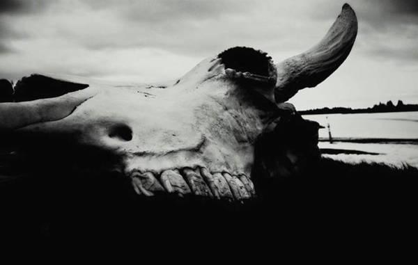 Bison Skull Black White Art Print