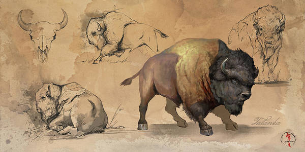 Wall Art - Digital Art - Bison Study Sheet by Steve Goad
