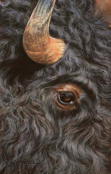 Up North Painting - Bison Up Close by David Stribbling