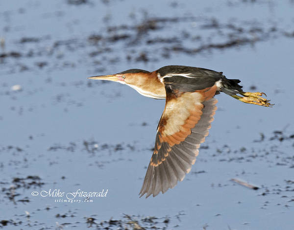 Photograph - Bit Of Flight by Mike Fitzgerald