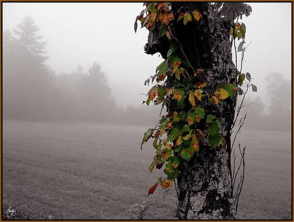 Photograph - Bittersweet Mist by Wayne King