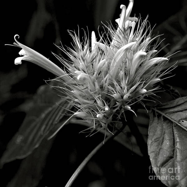 Photograph - Bizarre Flower Charm by Silva Wischeropp