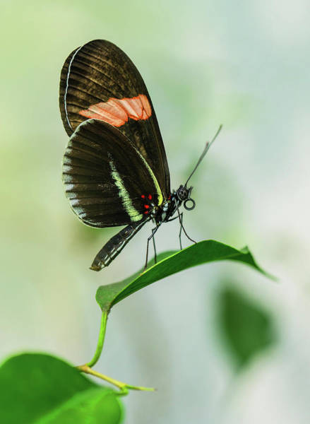 Photograph - Black And Red Butterfly Resting On The Branch by Jaroslaw Blaminsky