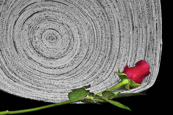 Rose Bowl Photograph - Black And White And Red All Over by Nikolyn McDonald