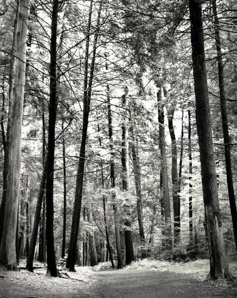 Swallow Falls State Park Wall Art - Photograph - Black And White At Swallow Falls by Michael Forte