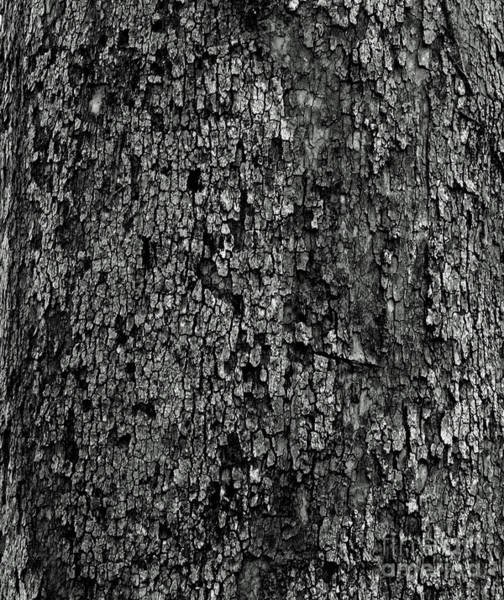 Photograph - Black And White Bark by Karen Adams