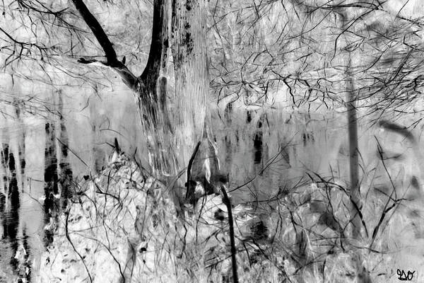 Photograph - Black And White Bayou II by Gina O'Brien