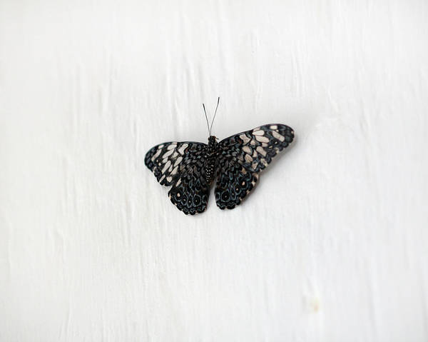 Photograph - Black And White Butterfly by Angela Murdock