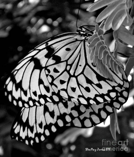 Photograph - Black And White Butterfly by Shelley Jones