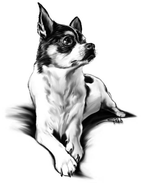 Painting - Black And White Chihuahua By Spano by Michael Spano