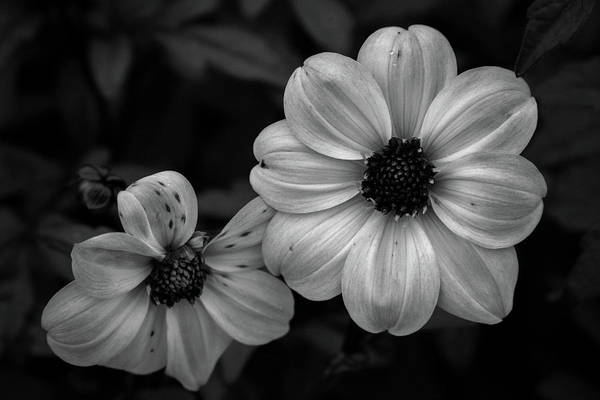 Photograph - Black And White Dramatic Blossoms 4769 Bw_2 by Steven Ward