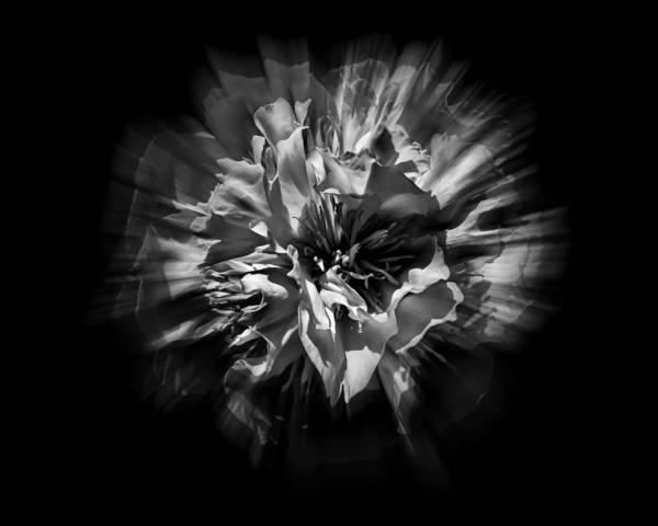 Photograph - Black And White Flower Flow 1 by Brian Carson