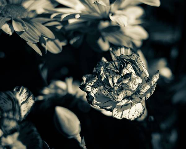 Photograph - Black And White Flowers by Keith Smith