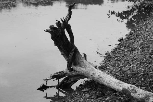 Wall Art - Photograph - Black And White by Heather Green