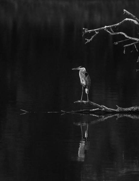 Photograph - Black And White Heron Reflection by Dan Sproul