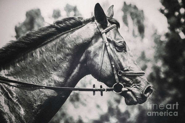 Photograph - Black And White Horse Art Portrait by Dimitar Hristov