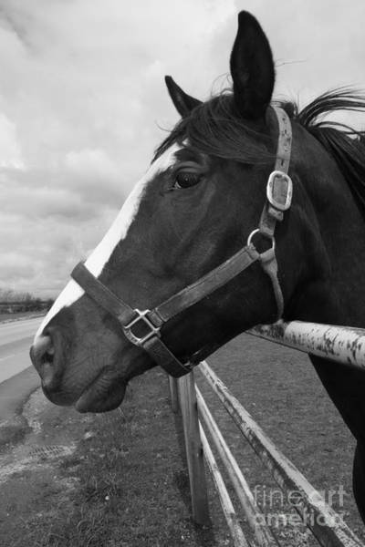 Photograph - Black And White Horse Beauty by Donna L Munro
