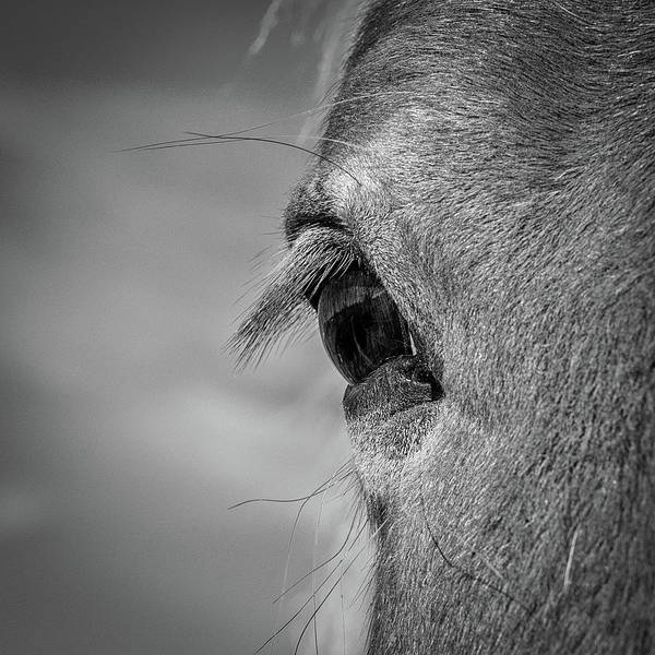 Gentle Man Wall Art - Photograph - Black And White Horse Eye by Paul Freidlund