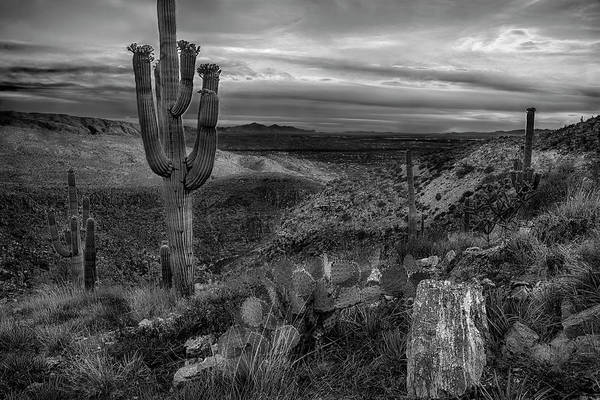 Photograph - Black And White Image Of The Catalina Mountains Near Tucson Az by Dave Dilli