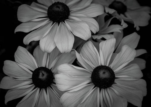 Photograph - Black And White Late Blossoms 5177 Bw_2 by Steven Ward