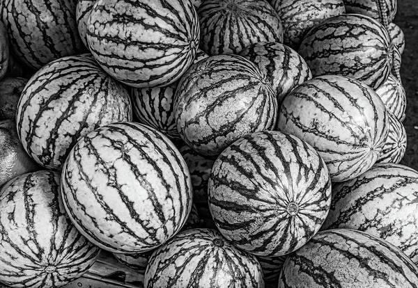 Photograph - Black And White Mellons by Michael Raiman