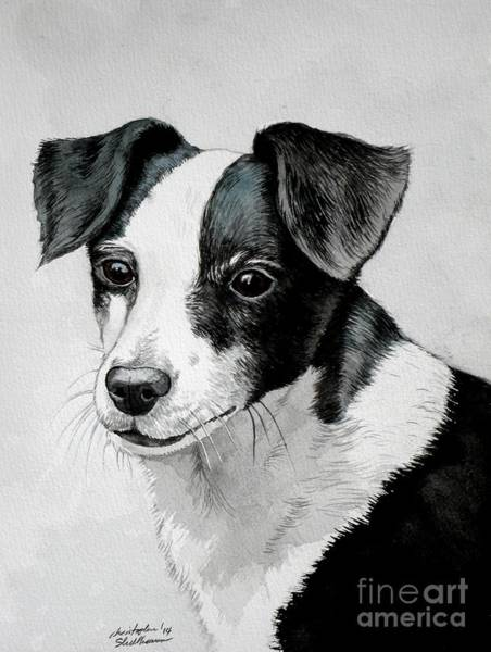 Painting - Black And White Mutt Dog by Christopher Shellhammer