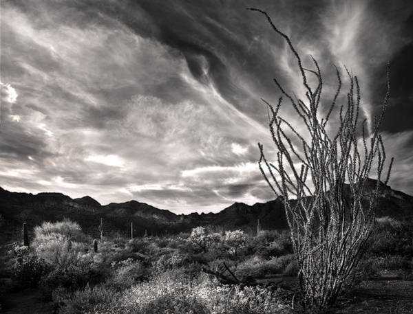 Photograph - Black And White Ocotillo And Clouds by Dave Dilli