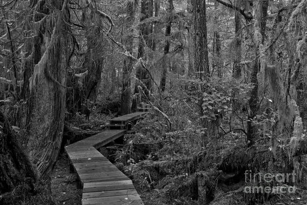 Photograph - Black And White Rainforest Boardwalk by Adam Jewell