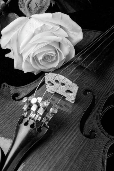 Foilage Photograph - Black And White Rose And Violin by Garry Gay