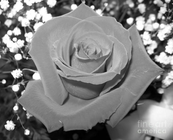 Photograph - Black And White Rose Macro 2 by Rose Santuci-Sofranko