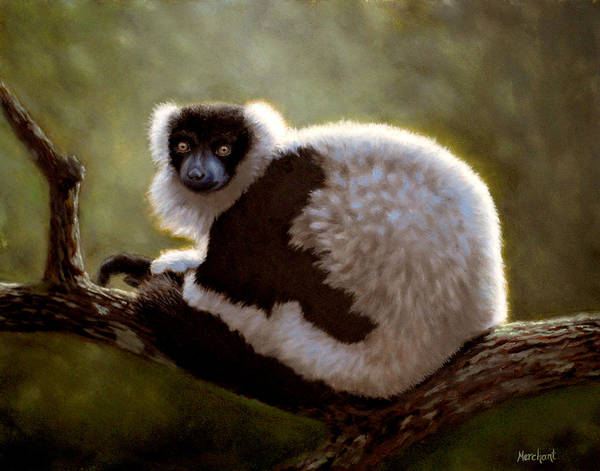 Painting - Black And White Ruffed Lemur by Linda Merchant