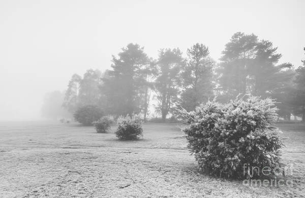 Wall Art - Photograph - Black And White Snow Landscape by Jorgo Photography - Wall Art Gallery