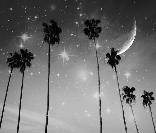 Photograph - Black And White Starry Night by Marianna Mills
