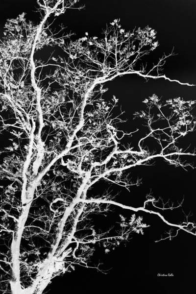 Photograph - Black And White Tree Art I by Christina Rollo