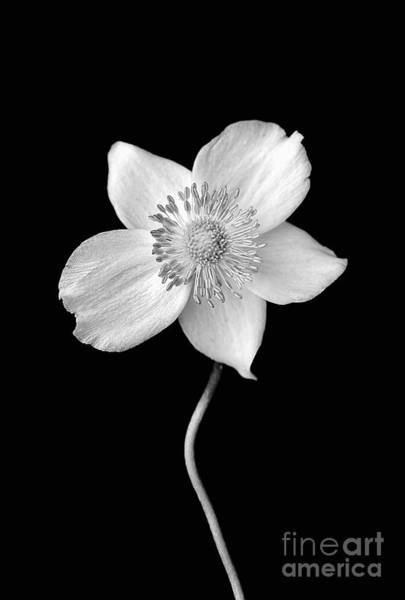 Wall Art - Photograph - Black And White Wildflower by Darren Fisher