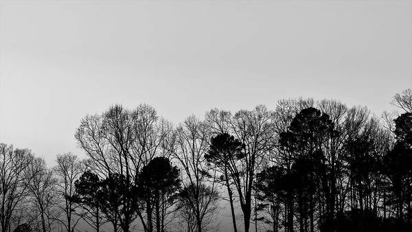 Photograph - Black And White Winter Silhouette by Keith Smith