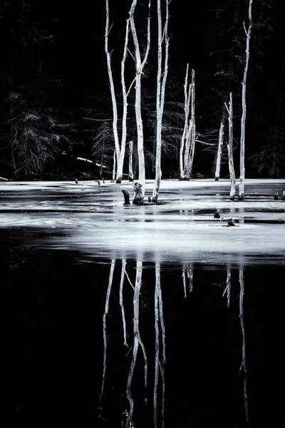 Photograph - Black And White Winter Thaw Relections by Tom Singleton