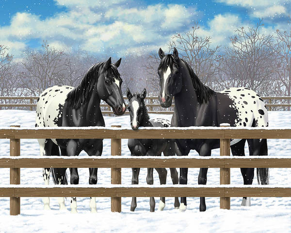 Wall Art - Painting - Black Appaloosa Horses In Snow by Crista Forest