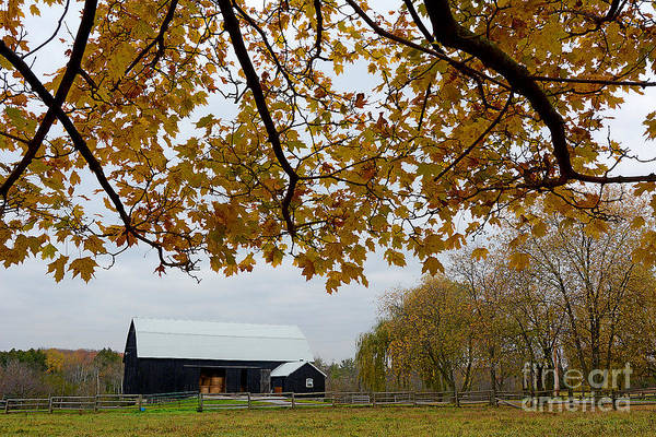 Photograph - Black Barn Farm by Steve Somerville