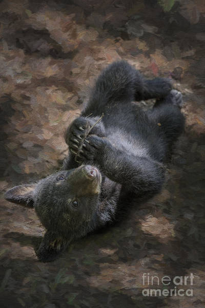 Photograph - Black Bear Cub Relaxing On The Ground  Paws Together    by Dan Friend