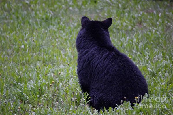 Photograph - Black Bear Cub by Wilko Van de Kamp