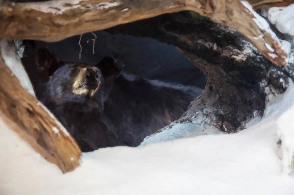 Digital Art - Black Bear In Its Winter Den by Chris Flees