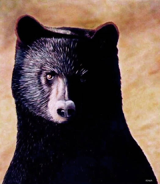 Painting - Black Bear by Kenneth M Kirsch