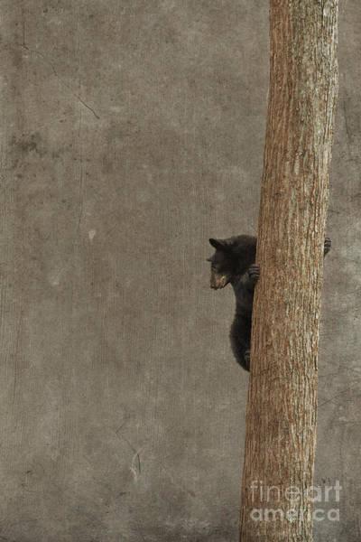 Photograph - Black Bear On Tree by Dan Friend