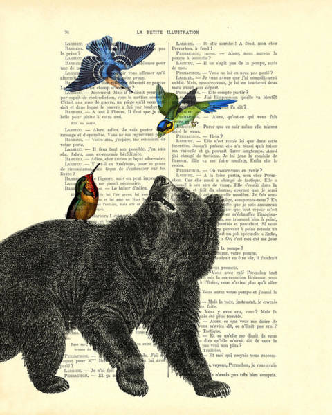 Flying Digital Art - Black Bear With Colorful Tropical Birds by Madame Memento